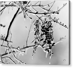 Ice Melting Acrylic Print by Sandy Keeton