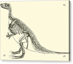 Iguanodon Acrylic Print by English School