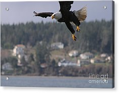 I'm Coming In For A Landing Acrylic Print by Kym Backland