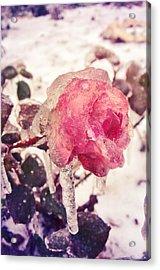 I'm Frozen.. Acrylic Print by Victoria  Kostova