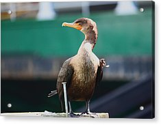 I'm Looking At You Acrylic Print by Kym Backland