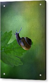 I'm Not So Fast Acrylic Print by Annie  Snel