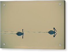I'm Sailing Right Behind Acrylic Print by Laurie Search