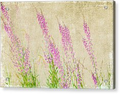 Impressions Of Spring Acrylic Print by Bonnie Bruno