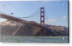 In Flight Over Golden Gate Acrylic Print by Scott Campbell