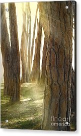 In Pine Forest Acrylic Print by Mythja  Photography