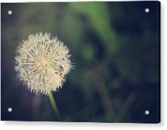 In The Afterglow Acrylic Print by Laurie Search