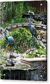 In The Back Yard Acrylic Print by Steven Parker