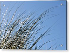 In The Breeze - Soft Grasses By Sharon Cummings Acrylic Print by Sharon Cummings