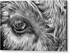 In The Eye Acrylic Print by John Farnan