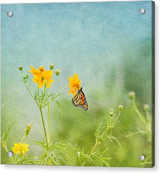 In The Garden - Monarch Butterfly Acrylic Print by Kim Hojnacki