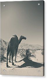 In The Hot Desert Sun Acrylic Print by Laurie Search