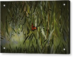 in the memory of Papillon Acrylic Print by Mario Celzner