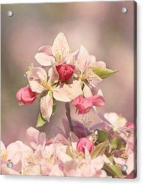 In The Pink Acrylic Print by Kim Hojnacki