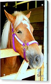 In The Stable 001 Acrylic Print by George Bostian