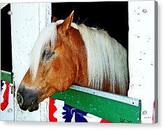 In The Stable 002 Acrylic Print by George Bostian