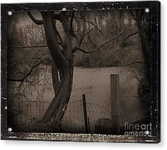 In The Times Of The Hanging Trees Acrylic Print by Roxy Riou
