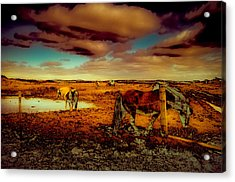 In The Tolt Acrylic Print by Buffalo Fawn Photography
