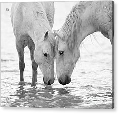 In The Water At Dawn II Acrylic Print by Carol Walker
