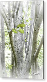 In The Woods Acrylic Print by Julie Palencia
