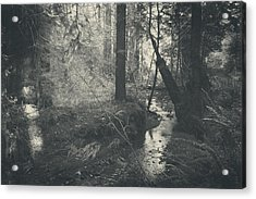 In This Silence Acrylic Print by Laurie Search