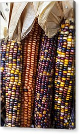 Indian Corn Close Up Acrylic Print by Garry Gay