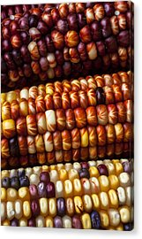 Indian Corn Harvest Time Acrylic Print by Garry Gay