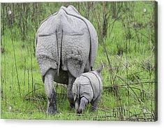 Indian Rhinoceros And Week Old Calf Acrylic Print by Suzi Eszterhas