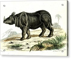 Indian Rhinoceros Acrylic Print by Collection Abecasis