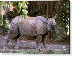 Indian Rhinoceros Acrylic Print by Mark Newman