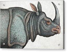 Indian Rhinoceros Acrylic Print by Paul D Stewart