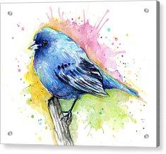 Indigo Bunting Blue Bird Watercolor Acrylic Print by Olga Shvartsur