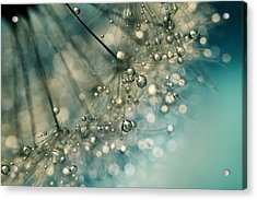 Indigo Sparkles Acrylic Print by Sharon Johnstone
