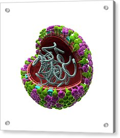 Influenza Virus Structure Acrylic Print by Harvinder Singh