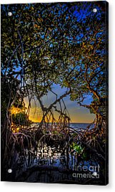 Inside Looking Out Acrylic Print by Marvin Spates