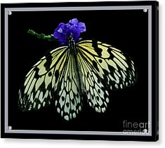 Inspired By Butterflies  Acrylic Print by Inspired Nature Photography Fine Art Photography