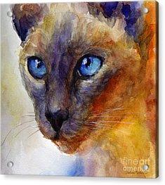 Intense Siamese Cat Painting Print 2 Acrylic Print by Svetlana Novikova