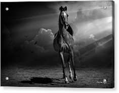 Into The Light Acrylic Print by Karen Slagle