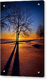 Into The Shadows Of Light Acrylic Print by Phil Koch
