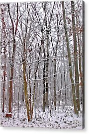 Into The Woods Acrylic Print by Bellesouth Studio