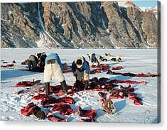 Inuit Hunters Butchering A Walrus Acrylic Print by Louise Murray