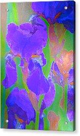 Iris 59 Acrylic Print by Pamela Cooper
