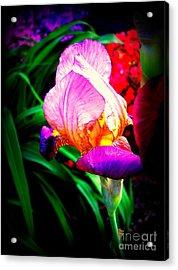 Iris Glow Acrylic Print by Janine Riley