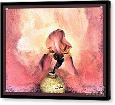 Iris On Fire Acrylic Print by Marsha Heiken