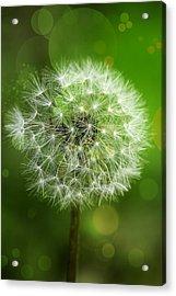 Irish Dandelion Acrylic Print by Bill Tiepelman