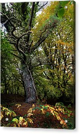 Is That Treebeard? Acrylic Print by Mark Callanan
