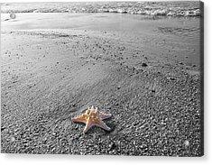 Island Star Acrylic Print by Betsy Knapp