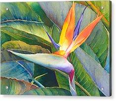 Its A Bird Acrylic Print by Judy Mercer