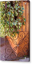 Ivy And Old Iron Gate Acrylic Print by Ben and Raisa Gertsberg