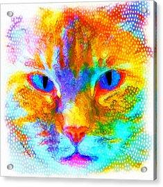 Izzy Acrylic Print by Moon Stumpp